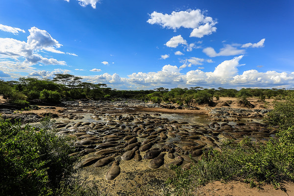 Hipo Pool - Serengeti National Park, Tanzania