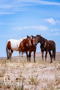 wlc  Z&B wild horses 1122019