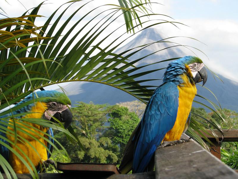 Macaw jpg