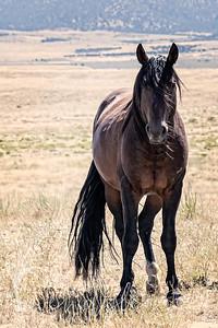 wlc  Z&B wild horses 872019