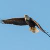 Archibald Eagle