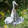 Crane sunbathing or posing?