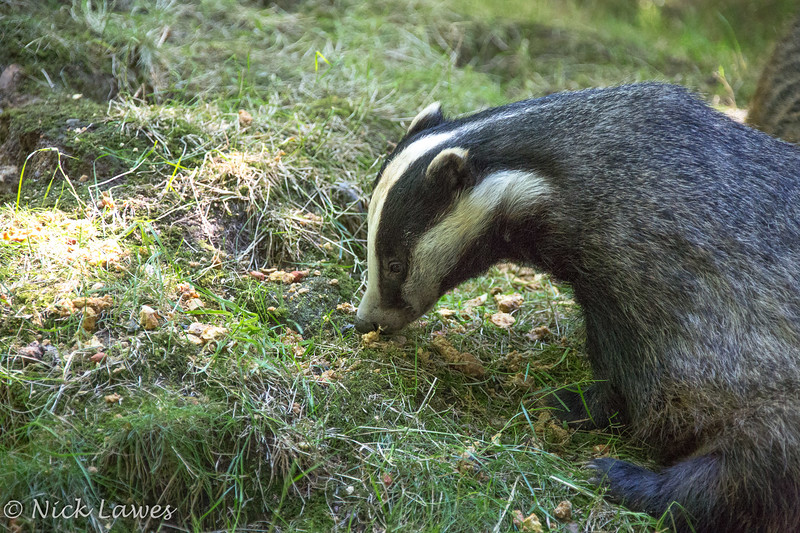 Don't badger me while I'm eating
