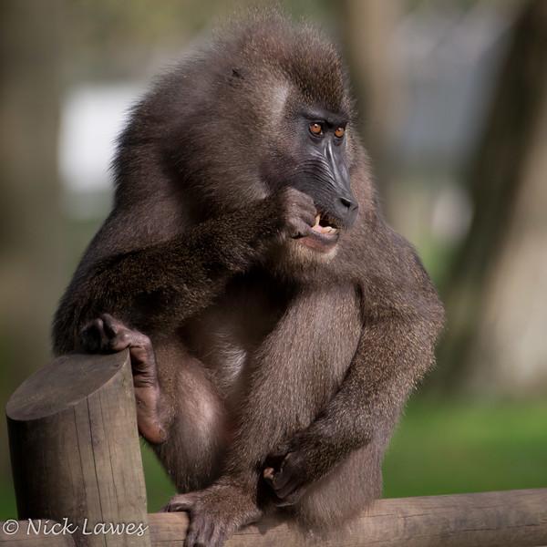 Drill Monkey