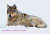 wolf a crop 1a