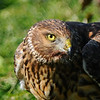 Hawk 76