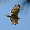 Hawk 11