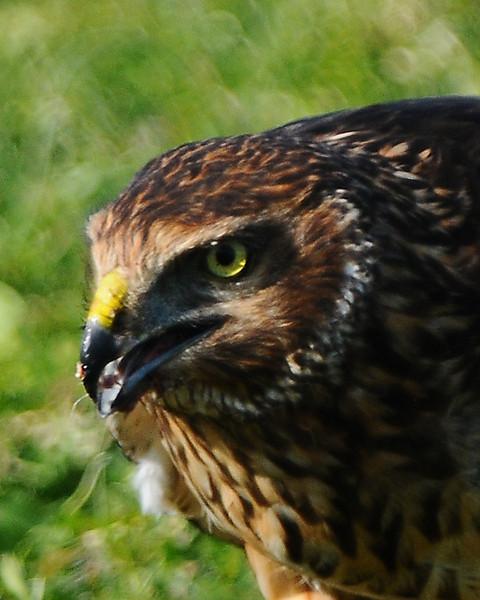 Hawk 65