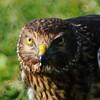 Hawk 64