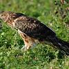 Hawk 45