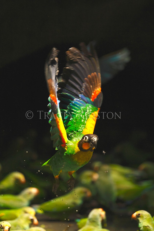 Yasuni National Park - Ecuador