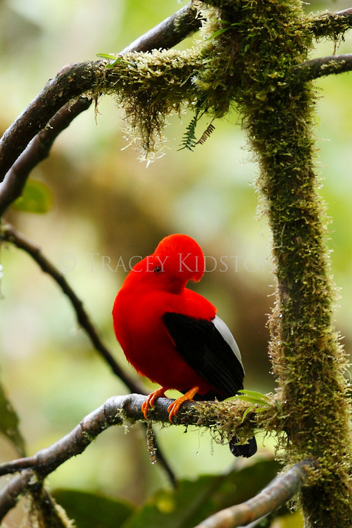 Mindo Cloud Forest - Ecuador