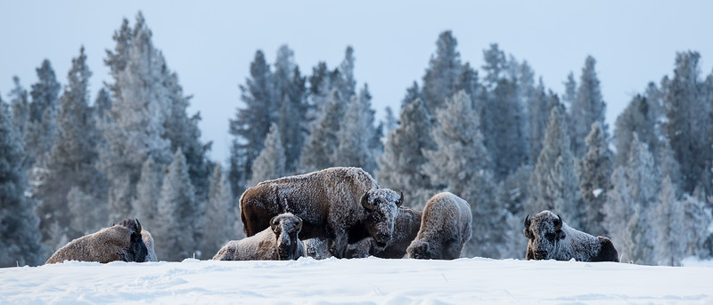 0303_Yellowstone_01162018