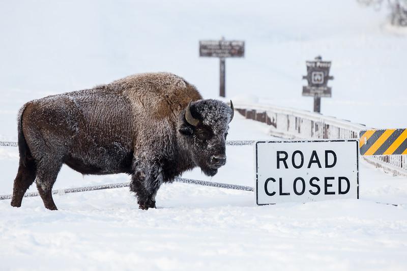 0391_Yellowstone_01162018