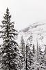 0110_Yellowstone_01202018