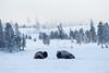 0446_Yellowstone_01162018