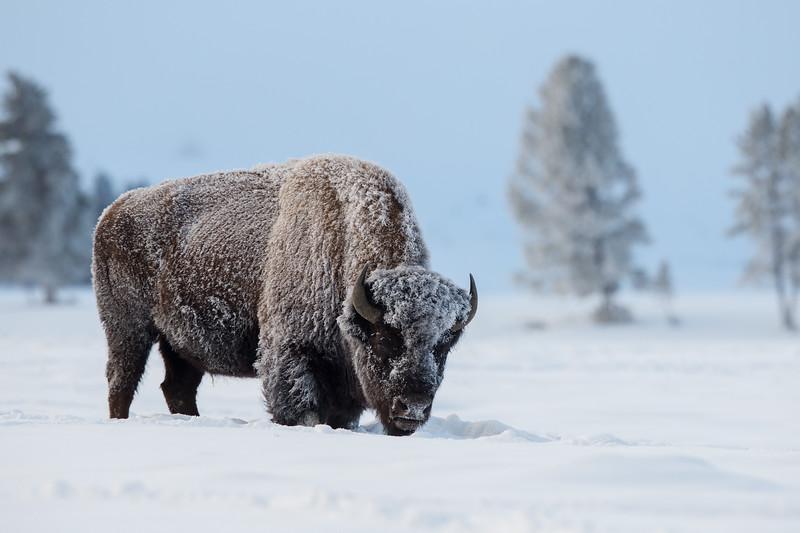 0314_Yellowstone_01162018