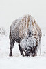 0900_Yellowstone_01162018