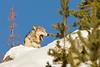 2005_Yellowstone_01162018