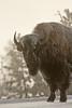 0737_Yellowstone_01162018