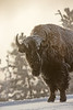 0702_Yellowstone_01162018