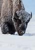 0314_Yellowstone_01162018-2