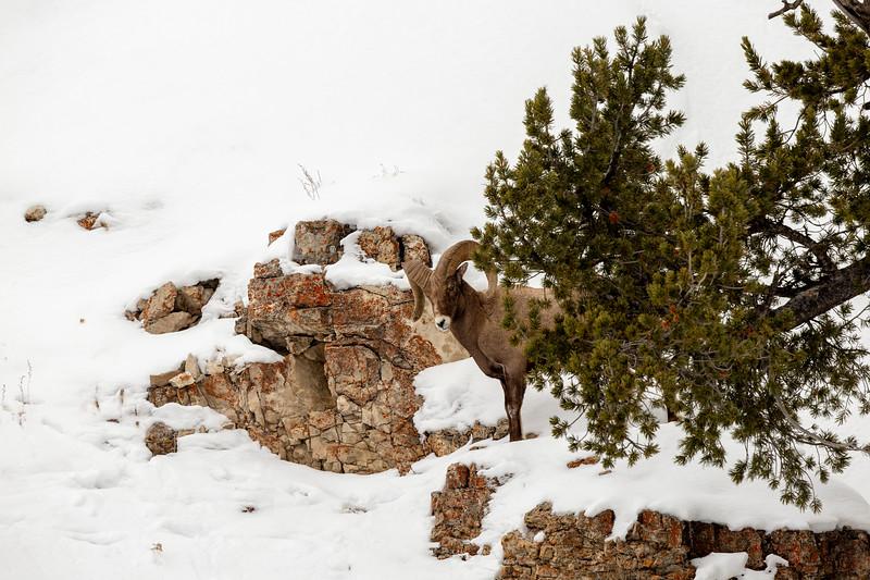0598_Yellowstone_01312019