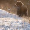 1065_Yellowstone_02012019-2