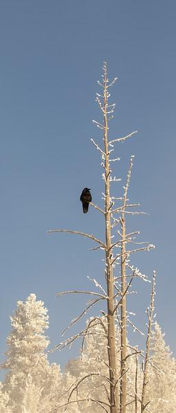 0010_Yellowstone_01282019