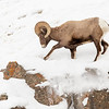 0693_Yellowstone_01312019-2