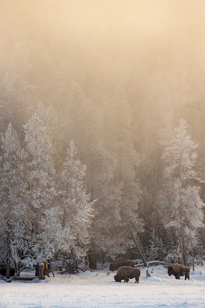 0102_Yellowstone_01292019