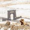 0914_Yellowstone_02022019