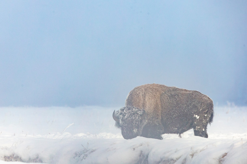 0192_Yellowstone_01292019