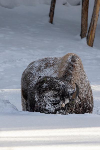 0166_Yellowstone_01282019