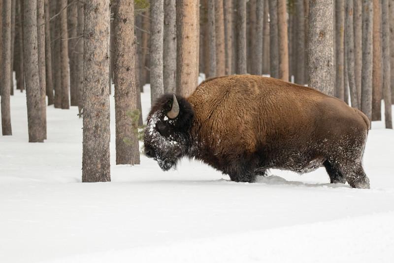 0181_Yellowstone_01262019