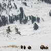 0018_Yellowstone_01302019