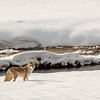 0926_Yellowstone_01272019