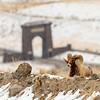 0921_Yellowstone_02022019