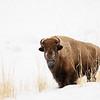 0010_Yellowstone_01302019