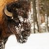 0099_Yellowstone_01262019