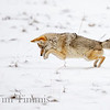 0058_Yellowstone_01272019-3