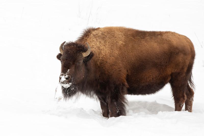 1208_Yellowstone_01312019
