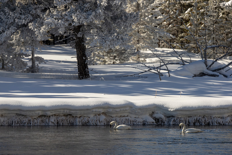 0217_Yellowstone_01292019