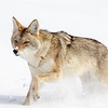 1287_Yellowstone_01272019