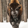 0074_Yellowstone_01262019
