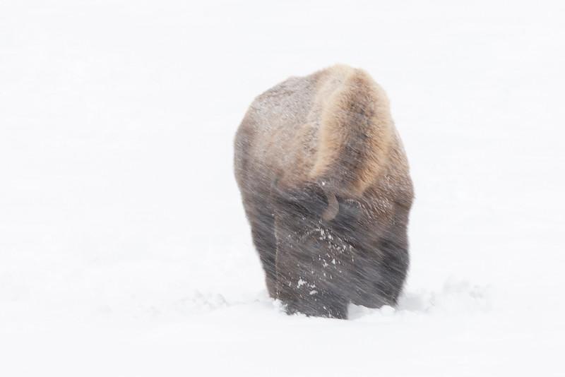 2583_Yellowstone_02032019