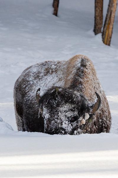 0184_Yellowstone_01282019