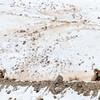 0636_Yellowstone_02022019