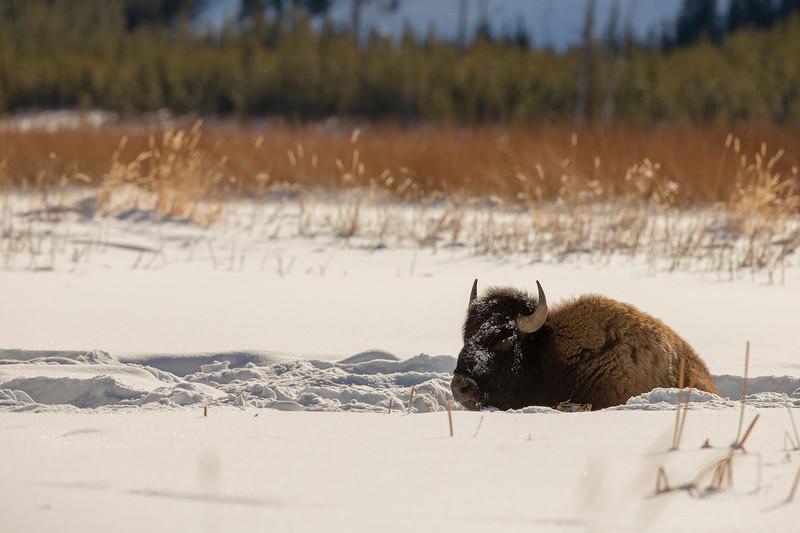 0273_Yellowstone_01292019