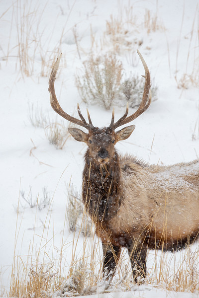 3091_Yellowstone_02032019